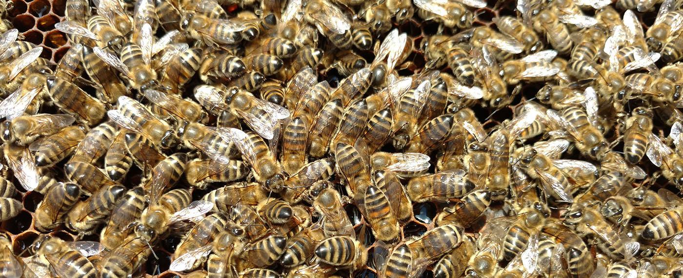 Τα διάφορα είδη μελιού, διακρίνονται ανάλογα με το φυτό όπου οι μέλισσες άντλησαν το νέκταρ – διάφορα άνθη, ελάτο, πεύκο
