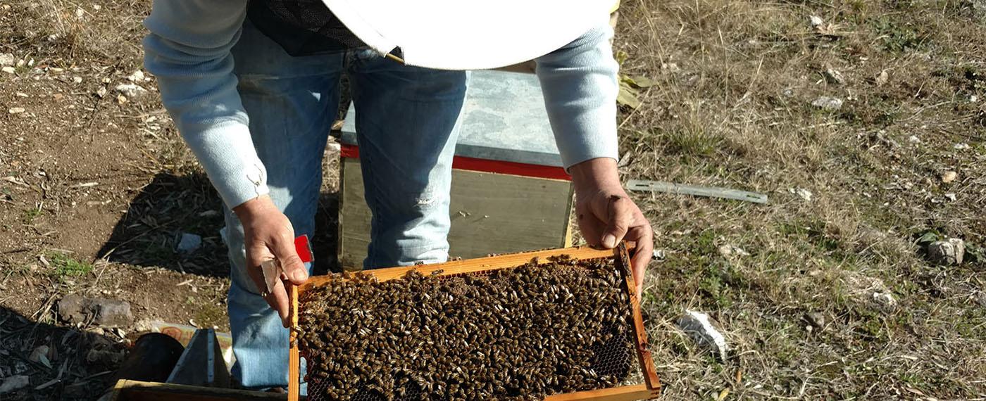 Το μέλι είναι ένας αληθινός θησαυρός υγείας και δύναμης